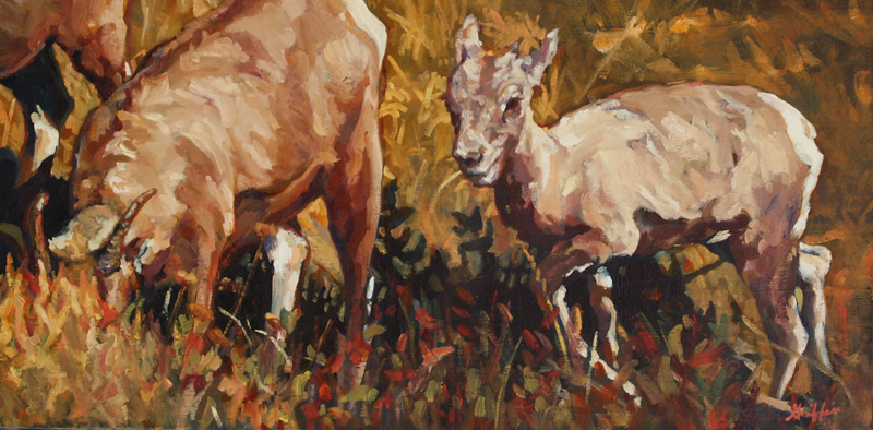 Baby Bighorn :: Artwork by Patricia A. Griffin